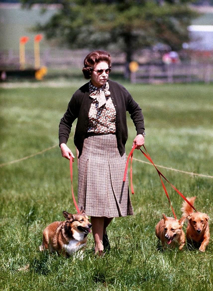 Erzsébet királynő azt nyilatkozta, hogy elhunyt házi kedvencei helyett már nem vesz magához újabb kutyusokat, mivel a halála után nem akarja őket hosszú évekre magukra hagyni.