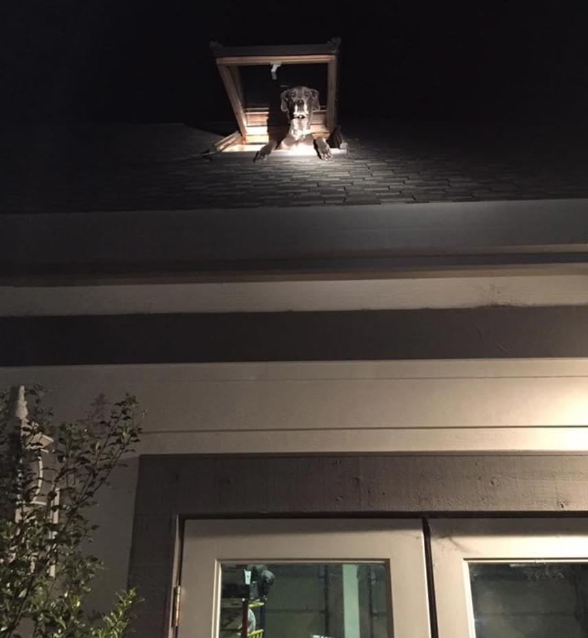 A kiérkező rendőrök azonnal nevetésben törtek ki, amikor észrevették a nyitott tetőablakon kikukucskáló fejet: sejtették, hogy köze van a furcsa zajokhoz, melyek a fiú elmondása alapján a padlásról érkeztek.