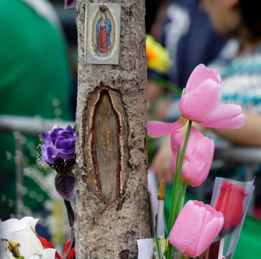 New York nyugati részén egy fatörzsön jelent meg Szűz Mária alakja. A fa közvetlen környezetét bekerítették, és egyfajta szentélyt alakítottak ki körülötte az oda zarándokolók: virágok és gyertyák tucatjait vitték és viszik ma is a helyszínre.