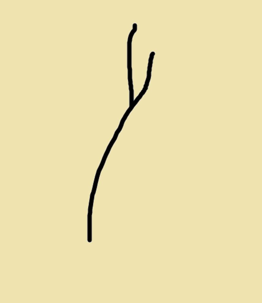 Sima ipszilonEz a legáltalánosabb hajvég-töredezettség. Kettéválik a hajszál vége a roncsolódások miatt. Ilyenkor még segít helyrehozni a kárt és regenerálni a hajvégeket a sima hajkondicionáló vagy hajbalzsam.