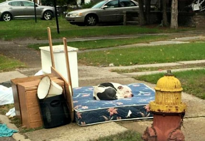 Boo egy hónapon át egy régi matracon aludt korábbi otthona előtt. A szomszédok nagyon sajnálták, ezért felkeresték a Detroit Youth & Dog Rescue nevű szervezetet.