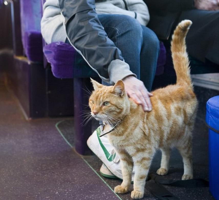 Utazás közben van, hogy csak üldögél - olykor valaki ölében -, de előfordul, hogy járkál az utasok között, és hagyja, hogy megsimogassák.