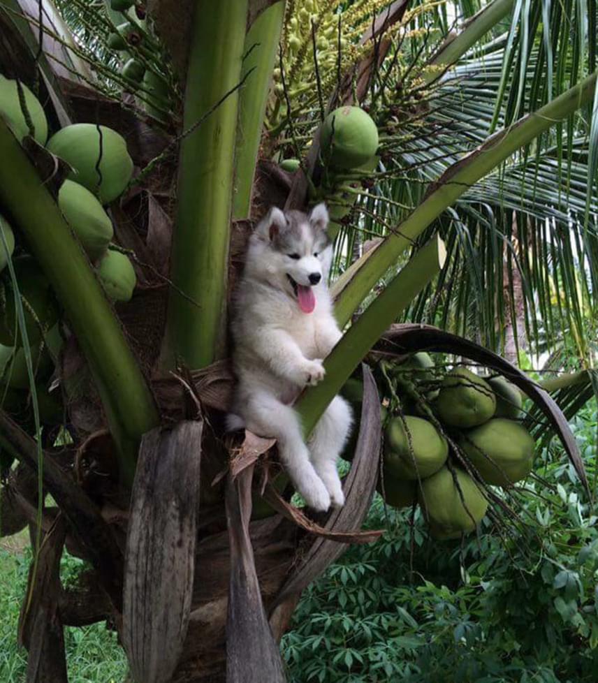 Íme, az eredeti fotó: a kutyát természetesen megmentették, miután elkészült a kép.