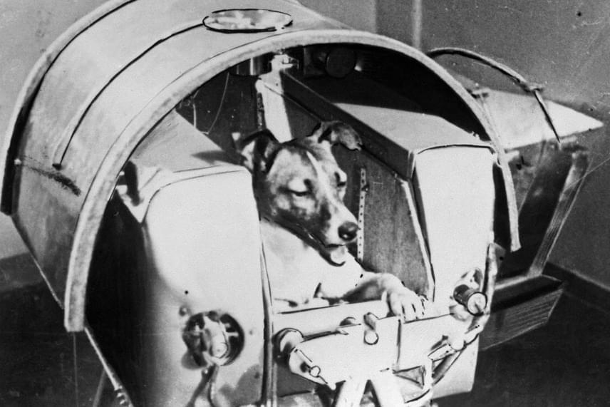 Egy másik verziója is volt a szovjeteknek: sokáig állították, hogy a kutya a küldetés hatodik napján oxigénhiány miatt veszítette életét, de ez a kijelentés sem bizonyult igaznak. Lajkát ma bátor, hősi halottként emlegetik, aki lehetővé tette, hogy az emberek már négy évvel később feljussanak a világűrbe, valamint a testére erősített elektródák segítségével rengeteg új információval szolgált a földi tudósoknak.