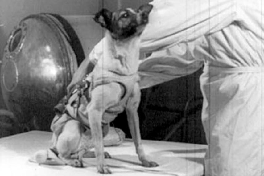 A kiválasztott kutyák közül Lajka teljesített a legjobban az előzetes teszteken, ezért végül őt választották a november 3-i kilövésre. A kutatók már ekkor tudták, hogy az állat nem fog visszatérni a Földre, ezért az orosz űrügynökség állítása szerint mérget adagoltak az űrben elfogyasztott tápjába - 2002-ben azonban kiderült, hogy Lajka a kilövés után pár órán belül elpusztult a túlhevült űrkapszulában, gyakorlatilag élve elégett.