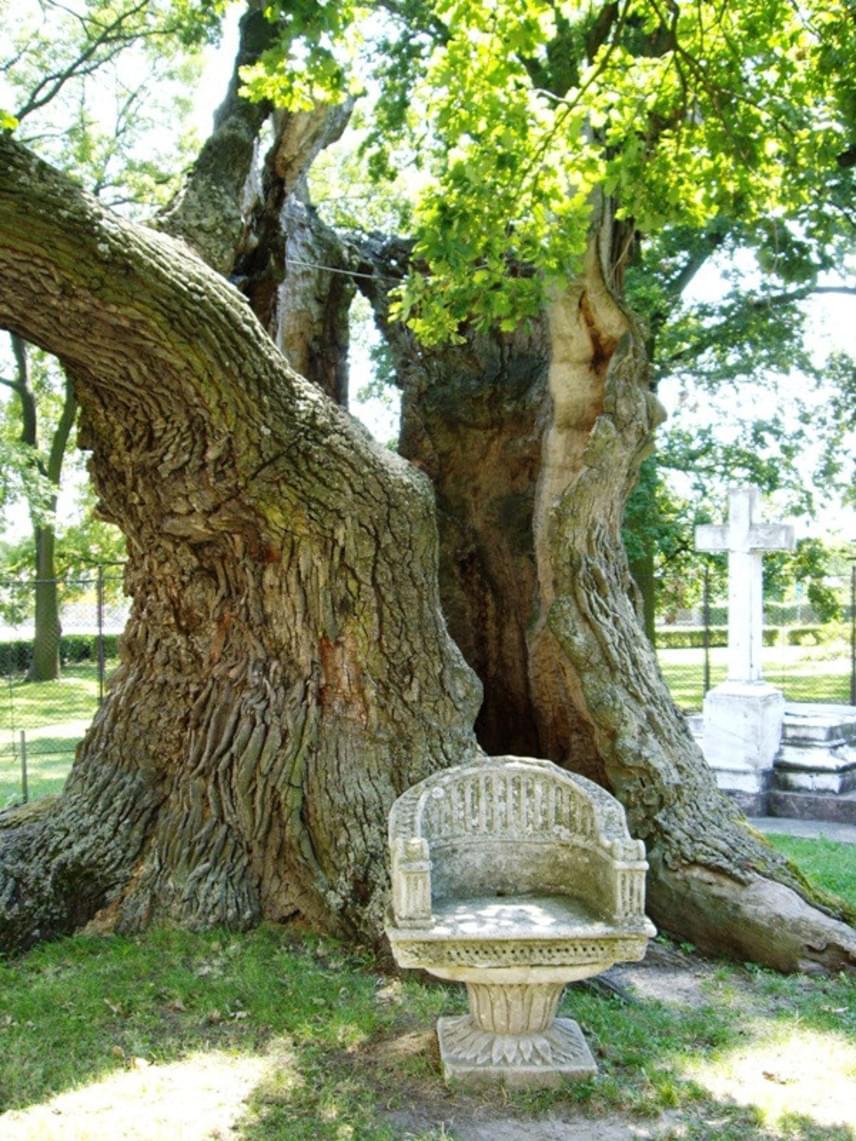 A jelenleg ismert legidősebb fa Magyarországon a hédervári Árpád-tölgy, amelyet nyolcszáz évesnek becsülnek, bár a legenda szerint törzsén már907-ben Árpád vezér lovának kötőféke hagyott nyomot. Idővel korhadásnak indult a fa, így komoly összefogásra volt szükség megmentéséhez, de egy ága máig minden évben kizöldül.