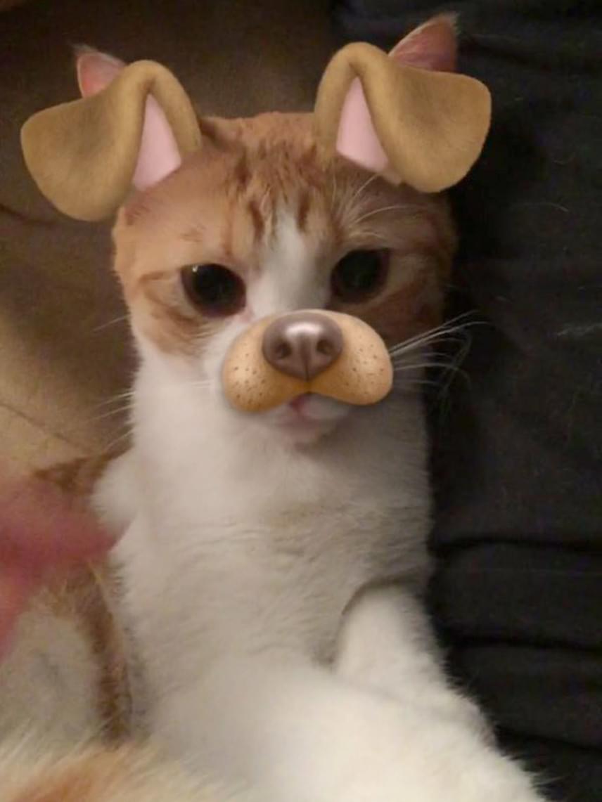 Ez a kép bizonyítja, hogy a nyuszis filter még a cicákon is jól mutat.