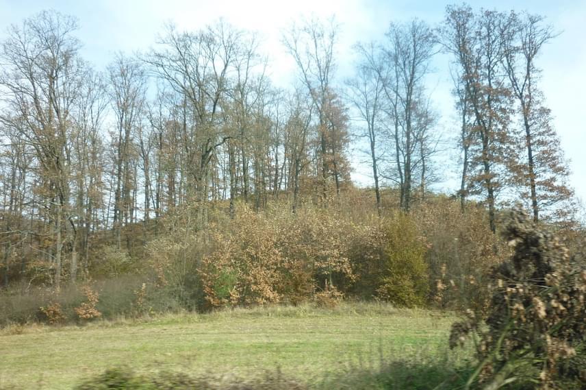 A szellemhistóriákon túl az ország több legendás szörnyeteget is magáénak tudhat: talán a legismertebb ezek közül a fanyűvő, amelyet több vidéken is látni véltek már. Az ősemberszerű, szőrös, két vagy négy lábon futkosó erdei lényt a Mátranovák körüli erdős vidékhez kötik elsősorban, de a Szigetköz melletti Kunszigetnél is vettek már észre hasonló, furcsa alakokat. A bizonyítékok nem vehetőek szentírásnak, mégis máig alapot adnak a legenda életben tartására.