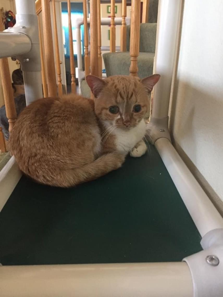 Mivel senki nem jelentkezett érte, Kalifornia leghíresebb macskamentője, a Milo's Sanctuary vette gondozásba őt, megadva minden szükséges kezelést, speciális diétát és szeretetet számára. A gondozói úgy vélik, az a tény, hogy ötéves, és különösebb beavatkozások nélkül jól van, óriási erőről árulkodik.