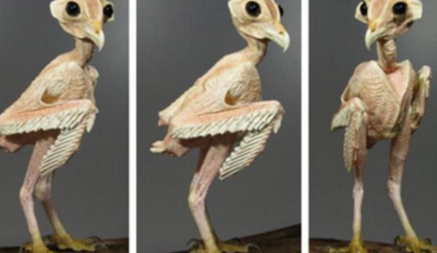 Íme, az első fotó, amit Dana megosztott. Jeffrey Meshach, a World Bird Sanctuary igazgatóhelyettese szerint jó, hogy az internetezők látják, mennyire meg tudja változtatni egy madár külsejét a tollazata.