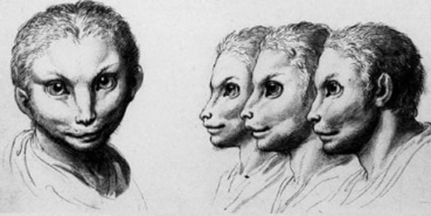 Charles Le Brun így képzelte el az ember külsejét, ha az a macskától származna.