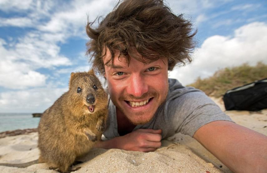 A Rottnest-sziget különleges lakójáról kapta a nevét a 19. századi holland felfedező hajósoktól, akik tévedésből patkányszerű állatnak nézték. Innen lett a sziget patkánysziget, vagyis Rottnest. A quokka azonban nem patkány: a kurta farkú kenguru bájával hamar a turisták kedvence lett.