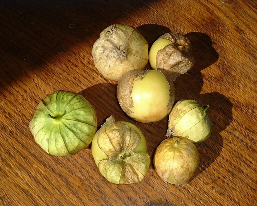 A megtalált bogyós termések legközelebbi rokona a tomatillo vagy mexikói földicseresznyenevű, Közép-Amerikában termesztett növény, amely ma például a salsa-szósz egyik alapanyagaként is ismert. A feltételezések szerint életében ehhez hasonlíthatott leginkább a megtalált zöldség.