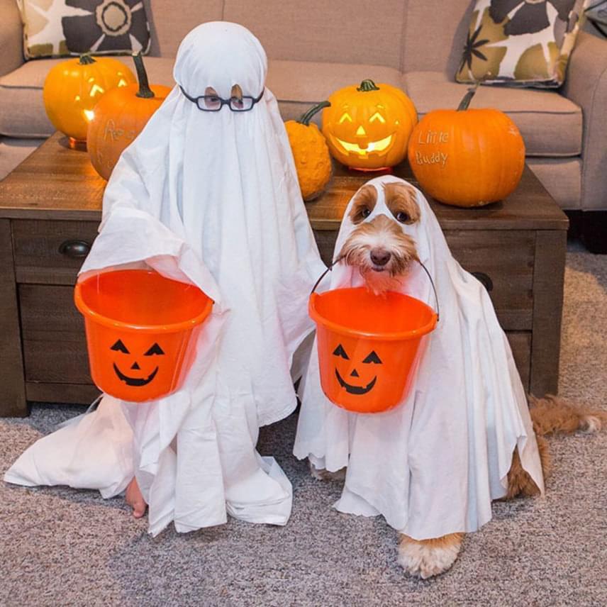 A kisfiú és a kutyus minden jeles napot együtt ünnepelnek, megfelelő dekorációval és kosztümökkel.