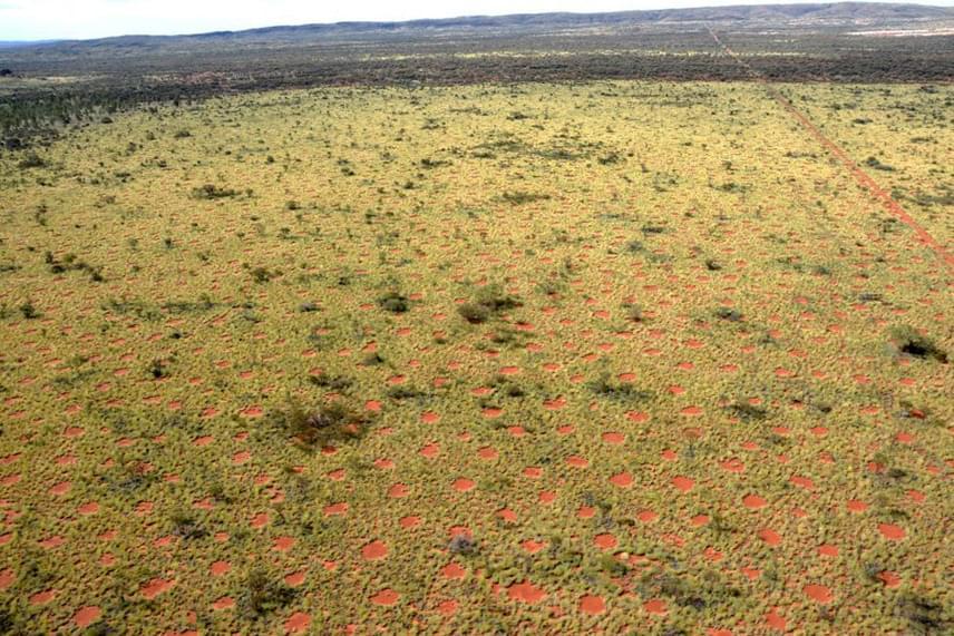 Ám nemrégiben 10 ezer kilométerrel odébb, Ausztráliában is hasonló köröket találtak, ám itt nem élnek termeszek. Ekkor arra jutottak, hogy a növények intelligens módon csoportokba szerveződnek, hogy minél hatékonyabban tudják hasznosítani a földben lévő, igen kevés tápanyagot.