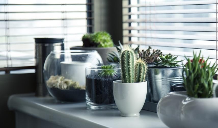 A növények alapvetően pozitív hatással vannak az emberre. A feng shui szerint az élő virágot választani a művel szemben a fejlődést, az előrelépést serkenti, mivel az élő növény fejlődik. Ha azonban kaktuszt nevelsz a hálószobában, sok jóra ne számíts: a szúrós növény a feng shui szerint szerelemtaszító.