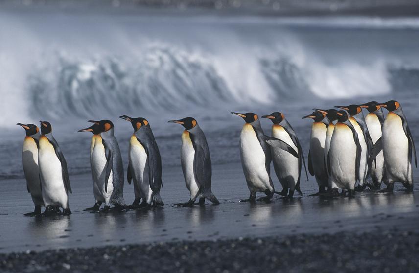 Ha a Déli-sark teljes jégtakarója elolvad, az több mint 3 méterrel emelheti az óceánszintet. Ennek tragikus következménye a tengerparti települések vízszint alá kerülése is, és a déli sarkvidék pingvinjeinek és fókáinak természetes élőhelyének megszűnése.