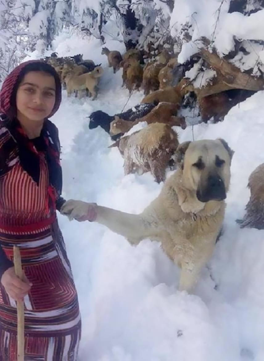 Hamdü Sena nagy nehézségek árán, elcsigázottan, de épségben ért haza a megmentett kecskékkel, a testvére által készített fotók és a szívmelengető történet pedig villámgyorsan bejárták az internetet.