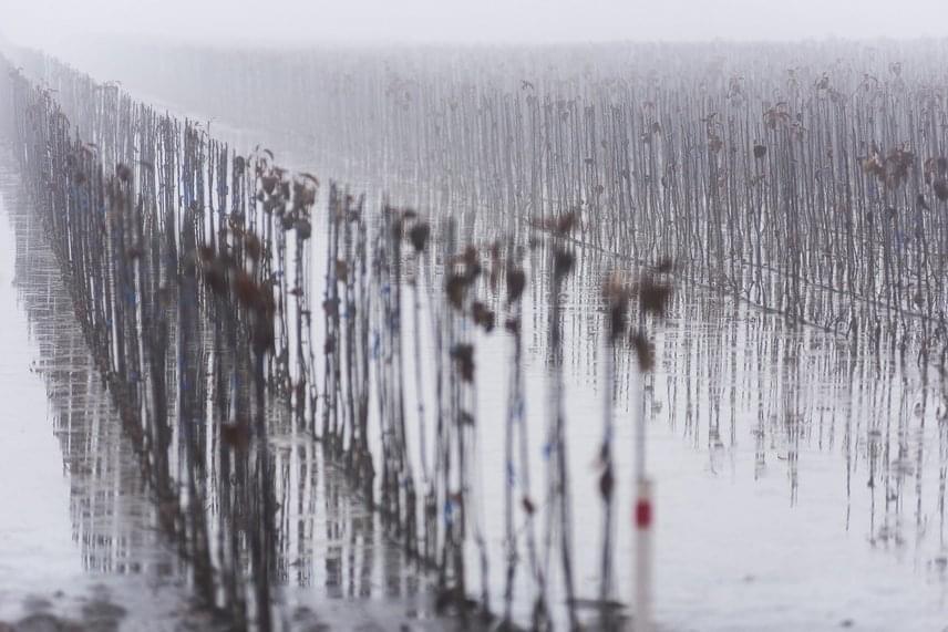 A víz Szabolcs-Szatmár-Bereg megyében a gyümölcsösöket és a faiskolákat is elöntötte, így a képen látható nagycserkeszi vidéket is. A Tisza jeges árhullámai és a belvíz által okozott károk nagysága még nem rajzolódott ki teljesen.
