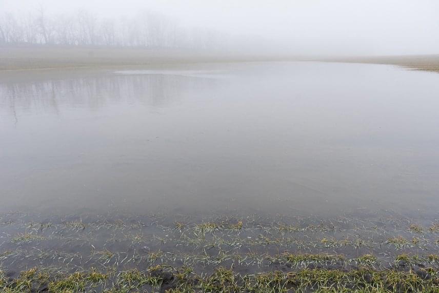 A víz egy csapásra elöntötte a szántóföldeket, ami a gyenge napsütésben nem párologhatott el. A következő napok esőzései pedig még tovább emelhetik a vízszintet, amit némileg enyhíteni fog a hamarosan érkező fagyos időjárás.