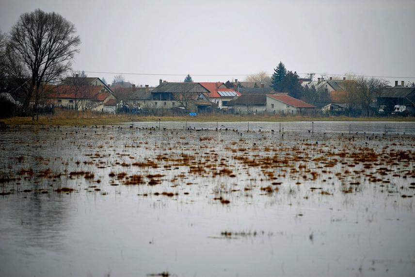 A Tiszántúli Vízügyi Igazgatóság működési területén az elmúlt 24 órában átlagosan 4,7 milliméternyi eső esett. Februárban, az eddig eltelt hat napon összesen 17,8 milliméter csapadék hullott átlagosan, ez több mint a fele a sokéves februári havi átlagmennyiségnek, ami 32,2 milliméter. A belvizes Hortobágyról ide kattintva még több fotót találsz.
