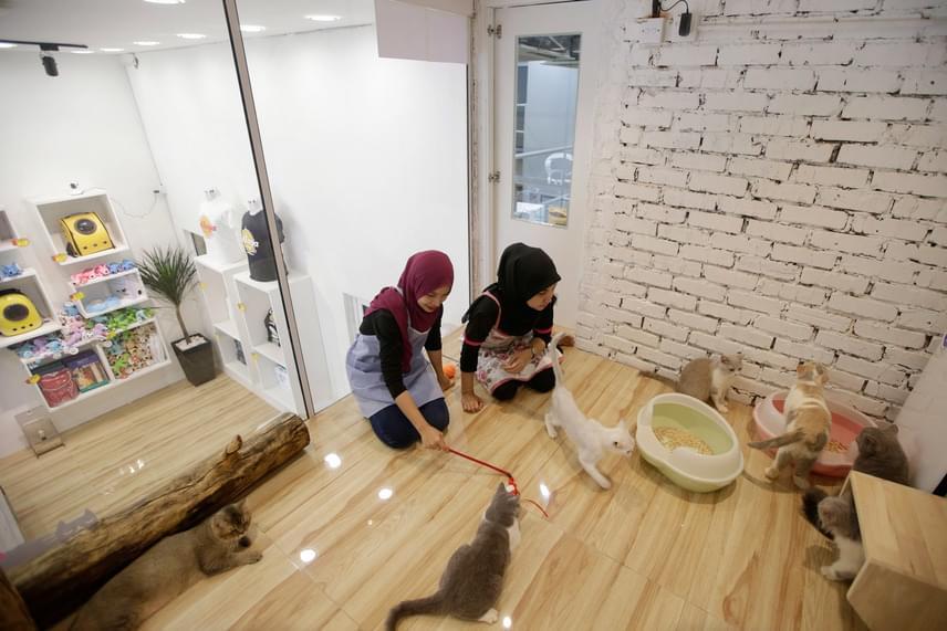 Alkalmazottak játszanak a cicákkal a Nagyon-nagyon Fontos Macskák lakrészében.