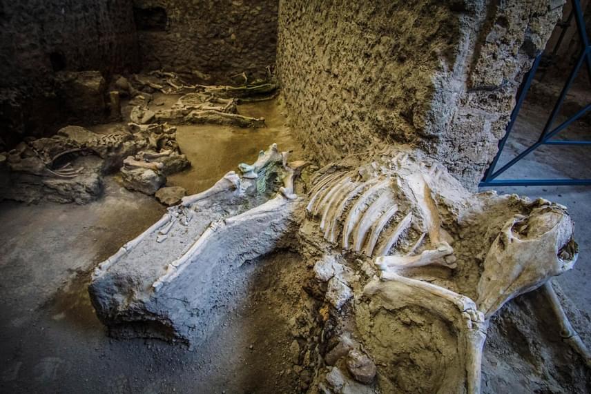 Öszvércsontvázak a pompeji Szűzies szeretők házának istállójában 2017. február 8-án, melyek többek között a vulkáni pornak és hamunak köszönhetően maradtak fenn ilyen jó állapotban.