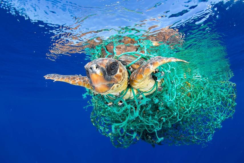 Halászhálóba gabalyodott teknős próbál szabadulni a spanyol Kanári-szigeteken fekvő Tenerife partjai előtt 2016. június 8-án. Francis Perez spanyol fotóriporter a Caretta caretta csapdában című képével első díjat nyert a természet egyedi kategóriában.