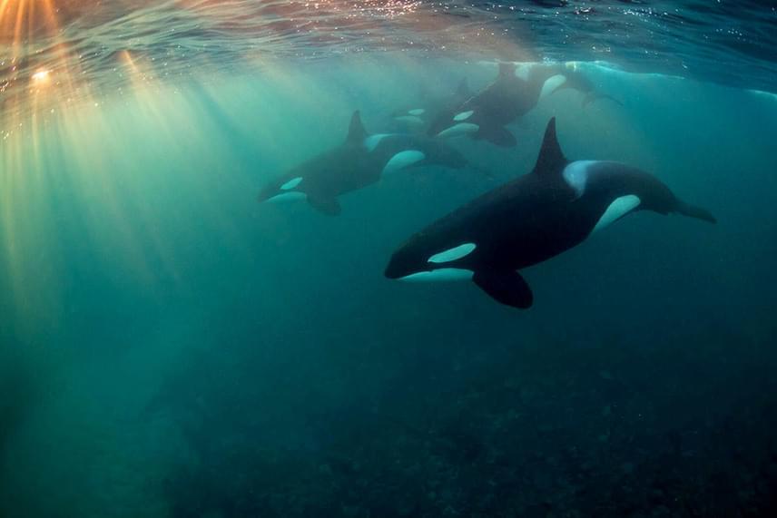 Az év feltörekvő fotósa az argentin Horacio Martinez lett, Óceán az égen című felvételével.
