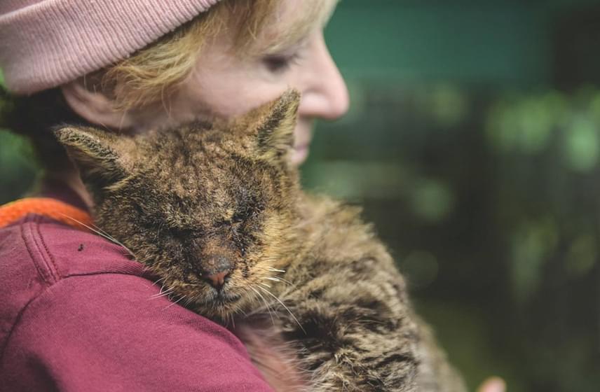 A cica fáradtan hajtotta fejét a nő vállára, mintha csak tudná, már nem történhet vele semmi rossz. Elaine azonnal egy állatmentő szervezethez fordult, kiknek segítségével a cica megkapta a szükséges orvosi ellátást. Remélik, hamarosan kész lesz az örökbefogadásra is.