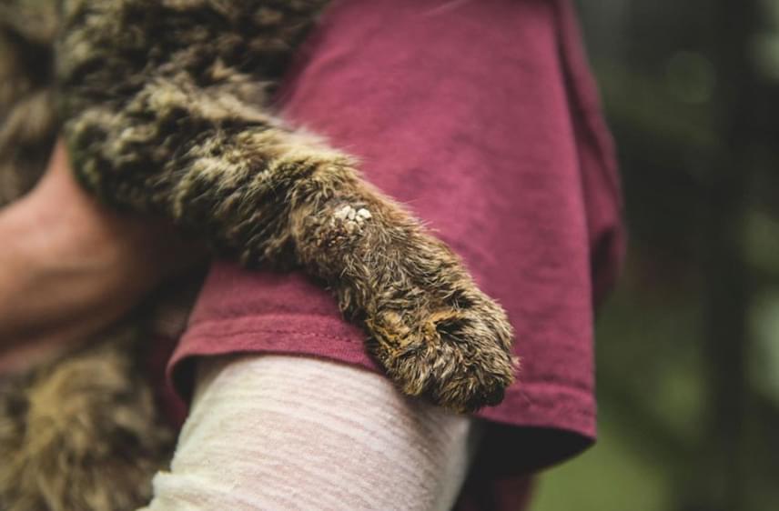 Bár sokáig úgy tűnt, a kismacskára nem vár túl szép jövő, amikor Elaine Seamans elsétált a kaliforniai Baldwin Parkban található menhely ketrece előtt, észrevette az aprócska lény segélykiáltását.
