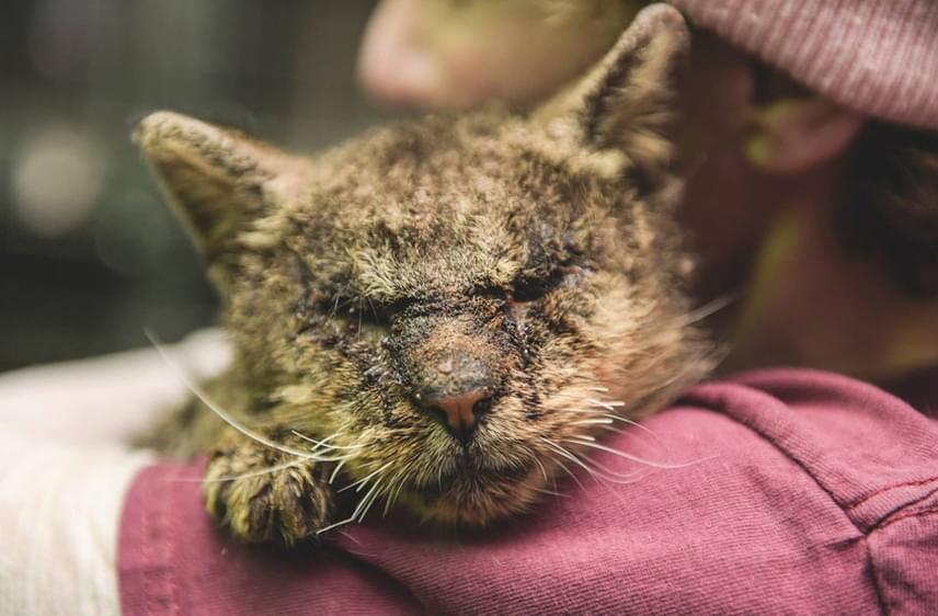 A cica halkan, szinte alig hallhatóan sírt, mancsát pedig kinyújtotta a ketrecből. A nő tudta, hogy segítenie kell, magához vette a cicát, így életében talán először, Valentinót egy ember magához ölelte.