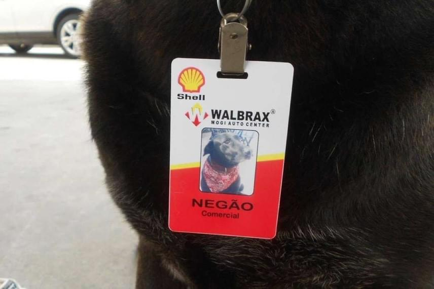 Még saját névkártyája is van, ami ugyanolyan, mint a többi dolgozóé, és amit a nyakörvére csíptetve visel.