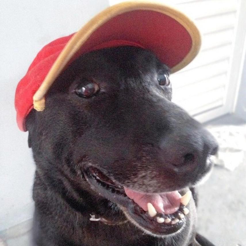Negão büszkén feszít a benzinkutas sapkájában, és a dolgozók szerint sok vásárlójuk már kifejezetten miatta tér vissza rendszeresen - vannak, akik még játékokat is vesznek a kutyának.