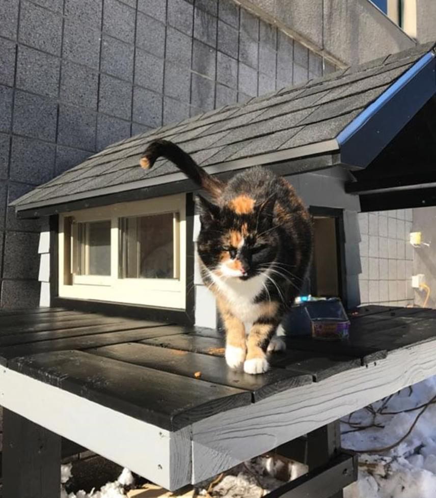 A Swat Cat névre keresztelt cica imádja királyi lakosztályát, amelyhez egy kis terasz is tartozik, ahol általában az ebédjét fogyasztja, és a kilátást szemléli.
