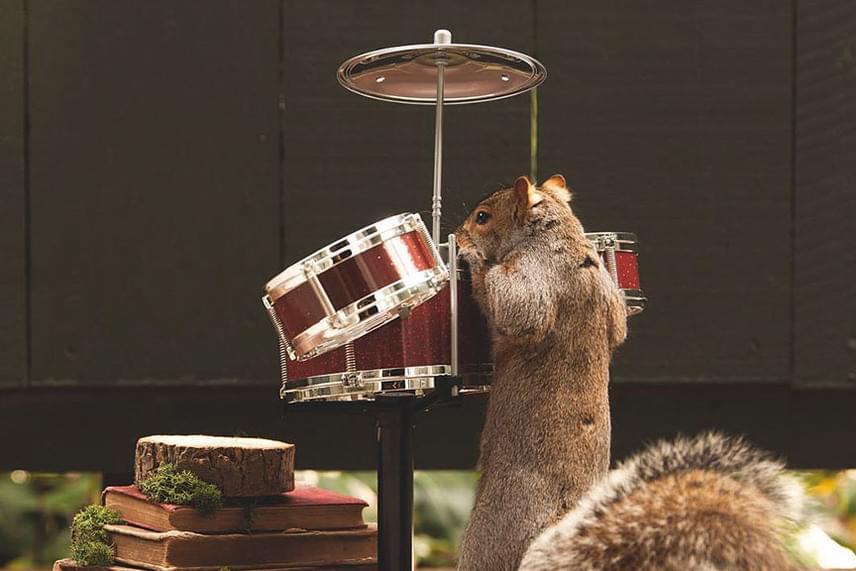 A tökéletes képre gyakran órákat kell várnia, hiszen a mókusok többsége csak felkapja az elemózsiát, és már szalad is, ám néha szerencséje van, és vendégei hosszabban maradnak.