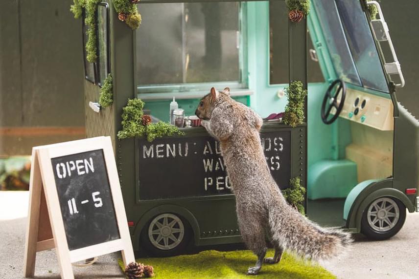 Ashley eleinte csak egy-két holmival rendezte be a terepet, később azonban azon kapta magát, hogy műfüvet rendel és mini furgont fabrikál. Még a mókus food truck nyitva tartására és menüjére - mogyoró, mandula, pekándió - is odafigyelt.