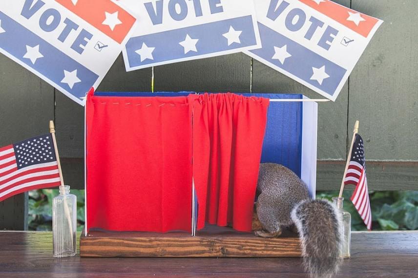 Egyik viccesebb installációja ez a szavazófülke, melyet a patrióta mókuskák lelkesen látogatnak.