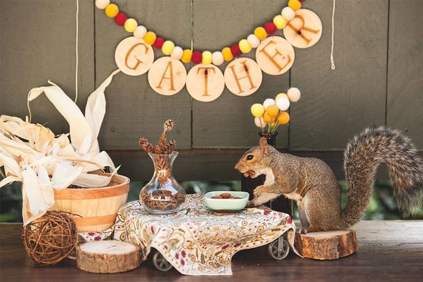 Ashley odafigyel rá, hogy olyan anyagokat használjon, amik nem hozzák zavarba a mókusokat, így a legtöbb dekoráció természetes.