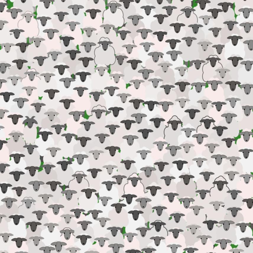 Megtalálod az ábrán a kecskét a bárányok közt? Ha nem megy, lapozz tovább egy közelebbi képért!