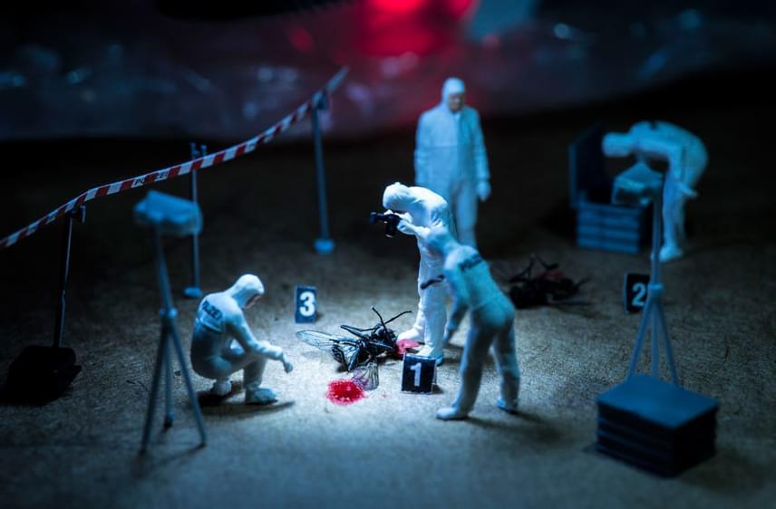 X-flies című képe egy rendkívüli helyszínelést ragadott meg, méghozzá egészen különös megvilágításban. Csákvári Péter ezzel a fotóval került be a Sony World Photography Awards 2017 szűkített mezőnyébe Csendélet kategóriában, Ceglédi Ádám mellett.