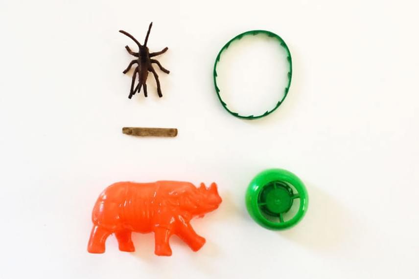 Kupak, szöcske és egy narancssárga dinoszaurusz: igazi fiús gyűjtemény.