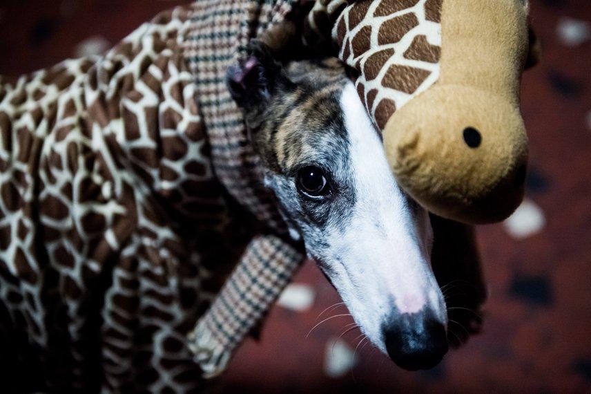 A jótékonysági ünnepséggel a két szervezet szerette volna felhívni a figyelmet az állatkínzás elfogadhatatlanságára, az összegyűlt bevételt az állatmentésre fordítják.