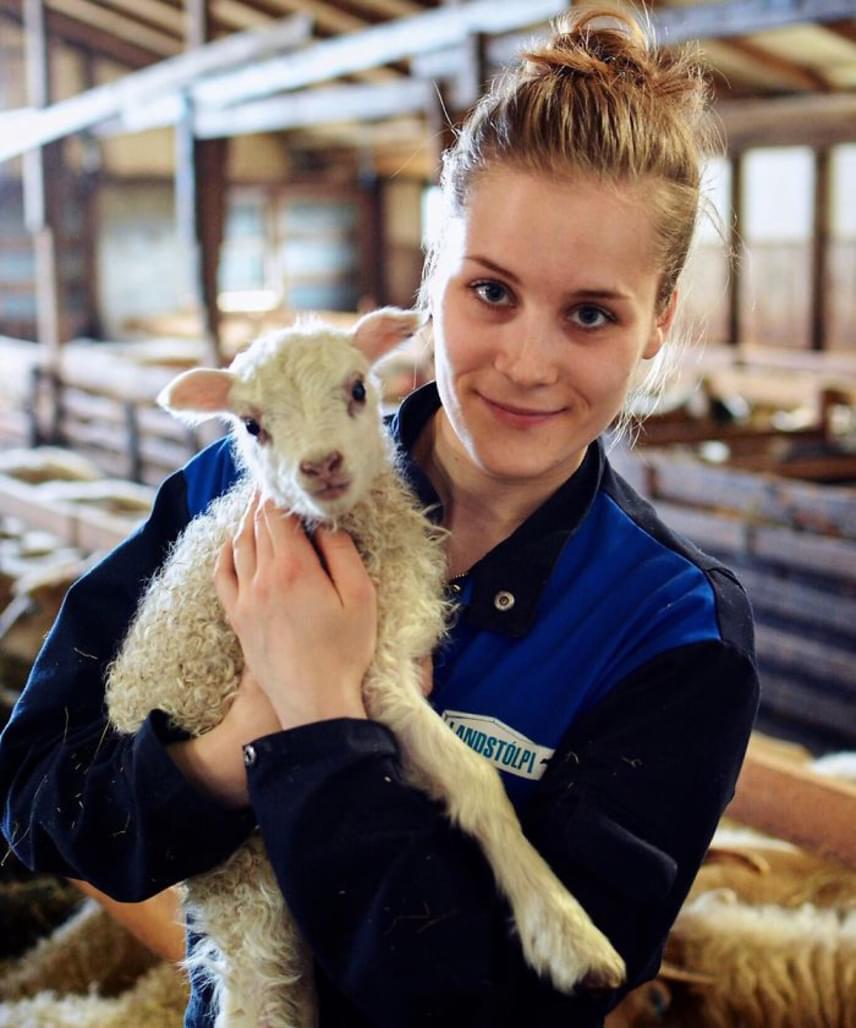 Palina imádja az izlandi farmot, kis kedvencekként öleli magához a bárányokat, de a munka sem piszkos neki, még az ellésnél is segíti az anyajuhokat. A lány egy évvel ezelőtt döntött úgy, hogy megosztja Instagram-oldalán az érdeklődőkkel a mindennapjaikról és az életterükről készült képeket.