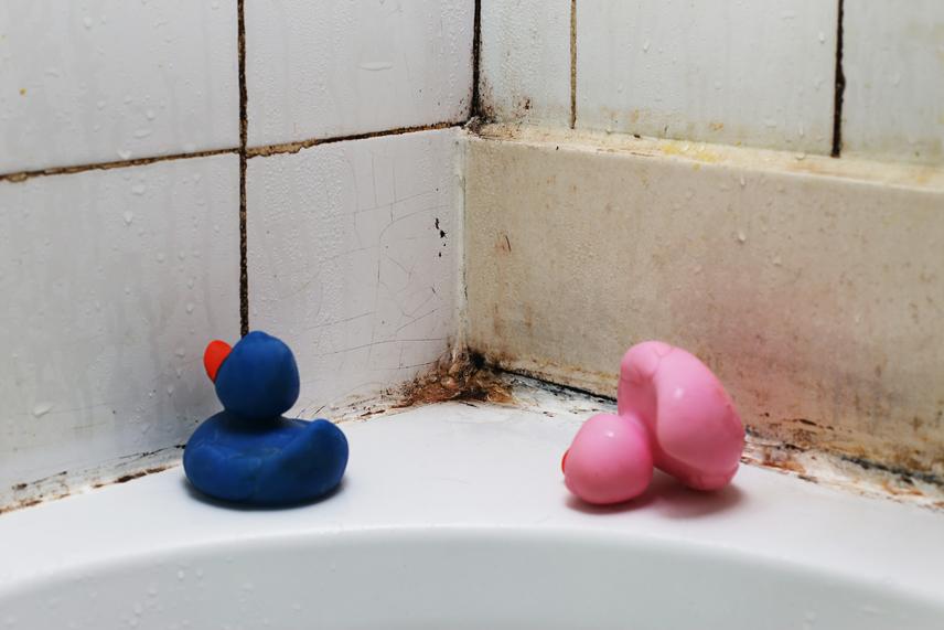 Penész ellen - a falakon vagy fürdőszobában megjelenő penészfoltok ellen hatásos a só. Egy enyhén nedves szivacsra szórt vastag sóréteggel töröld át a kérdéses felületet. A só negatívion-tartalma páramentesítő és fertőtlenítő hatású egyben. A gombaölő anyagai gátolják a spórák kialakulását és elszaporodását. Az egész lakás páratartalma csökkenthető egy nagy tál sóval, amely magába szívja a nedvességet. A nyirkos sót használat után nem kell kidobni, mert kiszárítva a sütőben újra felhasználható.