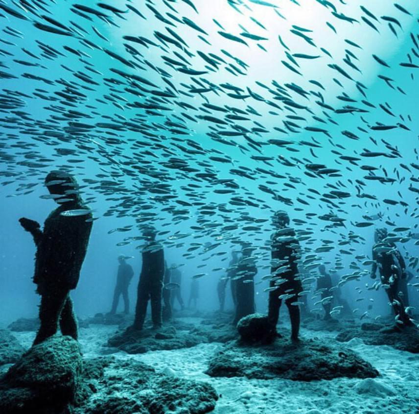 Míg a szobrokat lassan belepik az algák, korallok és fenéklakó állatok, addig a tenger más élőlényei is egyre komfortosabban érzik magukat az egyébként 100%-ig környezetbarát alkotások közt. A The Rubicon hatalmas szoborcsoportja között például szardíniarajok is szívesen úsznak a látogató búvárokkal.