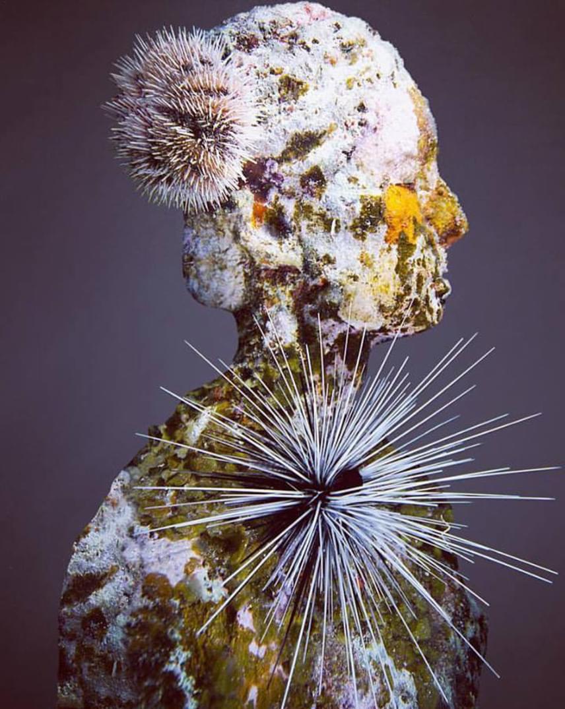 Számos régebbi szobron a természet folytatja az alkotómunkát, és teszi teljessé azt, amit Jason de Caires Taylor elkezdett.