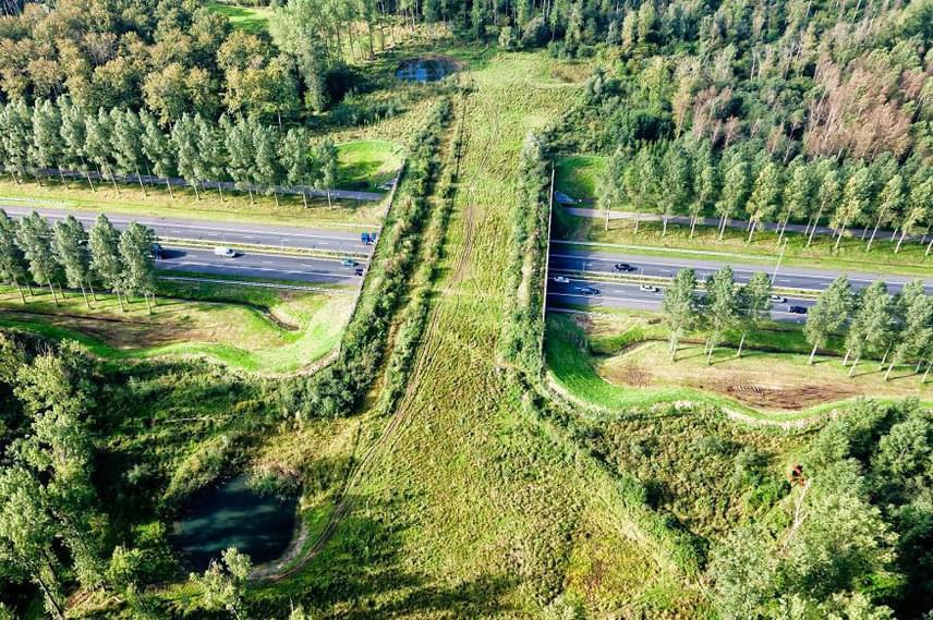 Hollandiában ezt a hidat emelték az állatvilág megóvása érdekében.