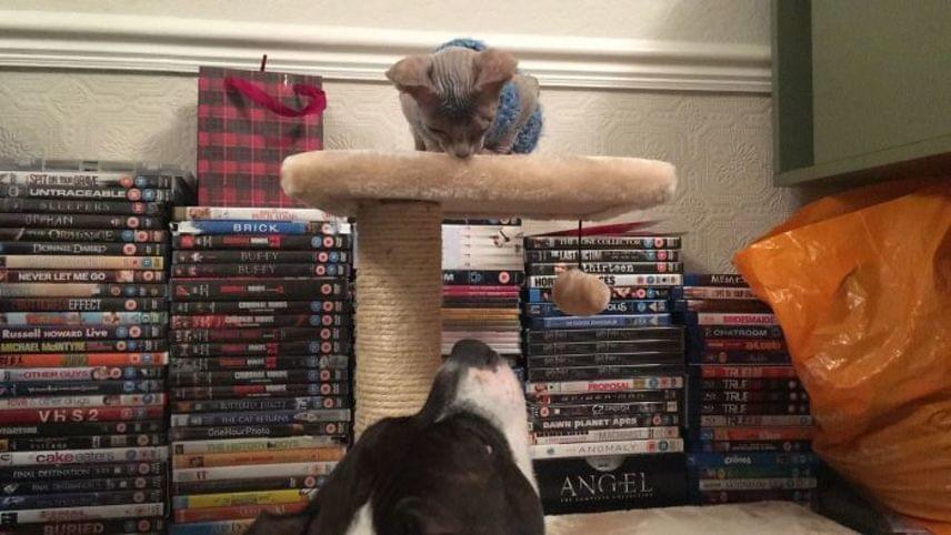 Phoebe Gill ezt követően vette magához Stitch-et, ám aggódott, hogyan reagál majd rá otthon Alaska nevű bullterriere.