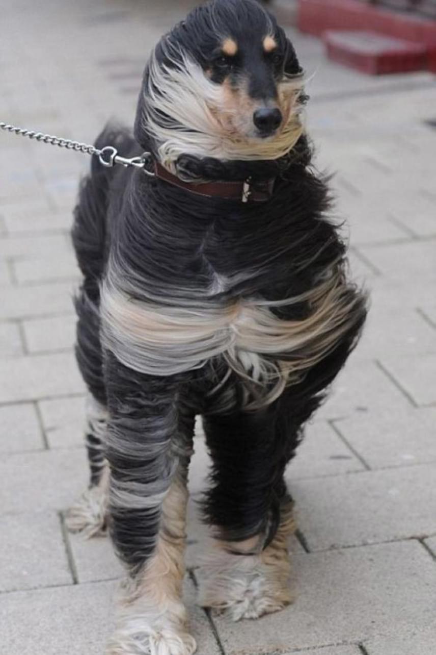 Még legnagyobb frizuratépő szélben is maradjunk mindig kifogástalanul elegánsak.